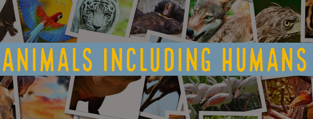 Animals Including Humans - MR P ICT ONLINE CPD